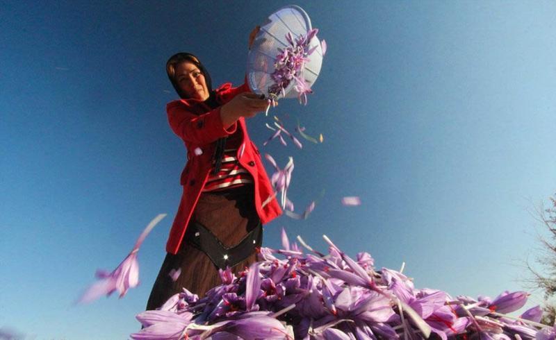 Saffron tour Iran